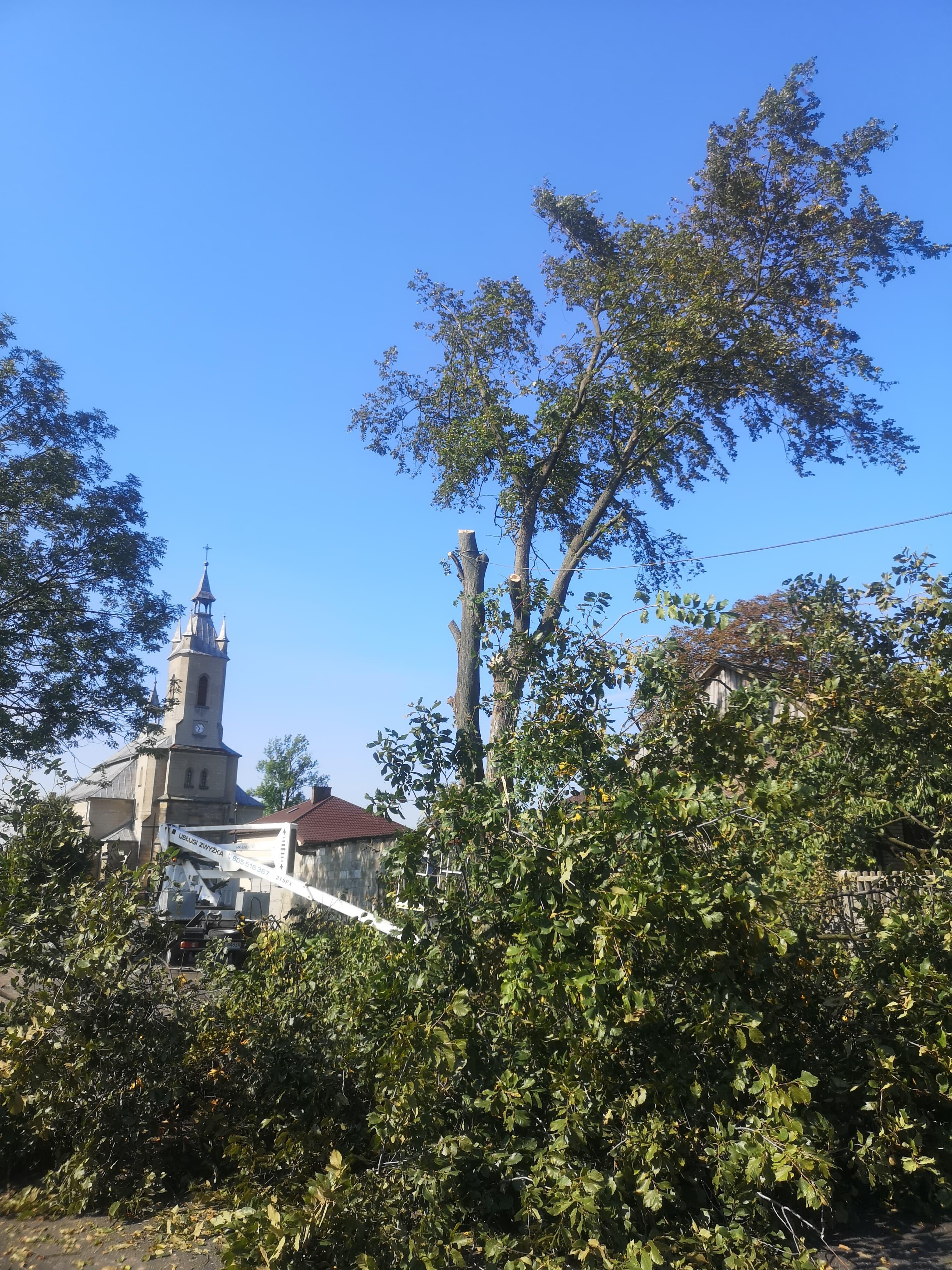 wycinka drzew radom